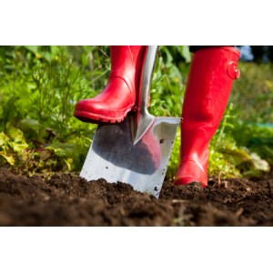 Садовая лопата: какой отдать предпочтение?
